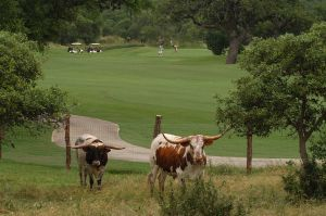 #1 Green with Longhorns